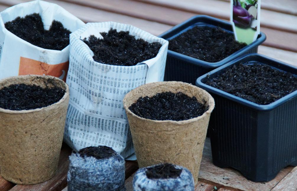 Wie entwickeln sich die Kohlrabi-Samen in den jeweiligen Aussaatbehälter?