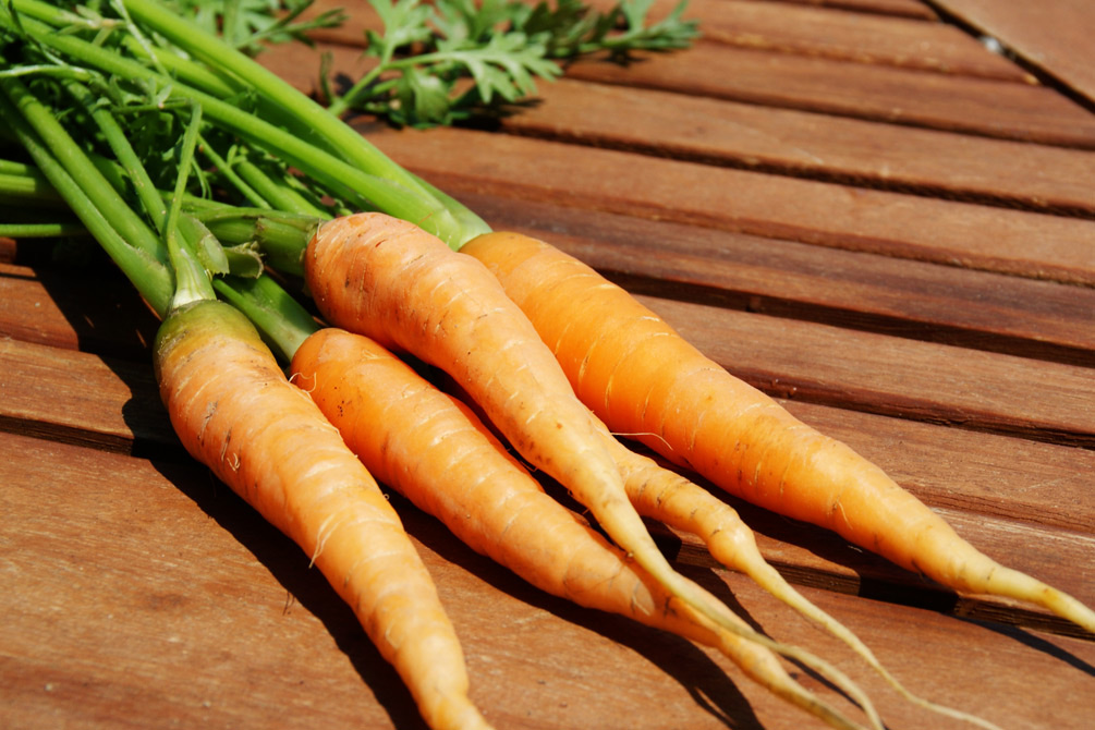 Karotten anbauen