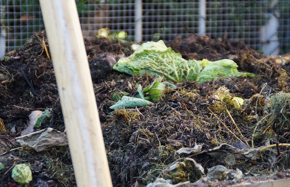 schnell Kompost