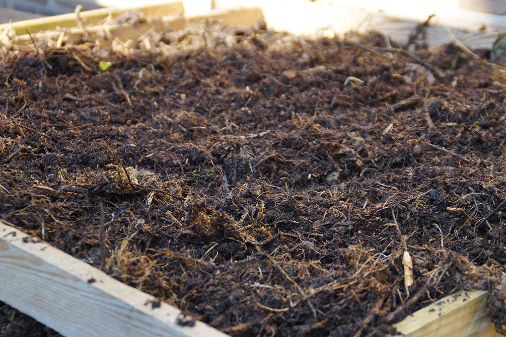Kompost Kompostrotte