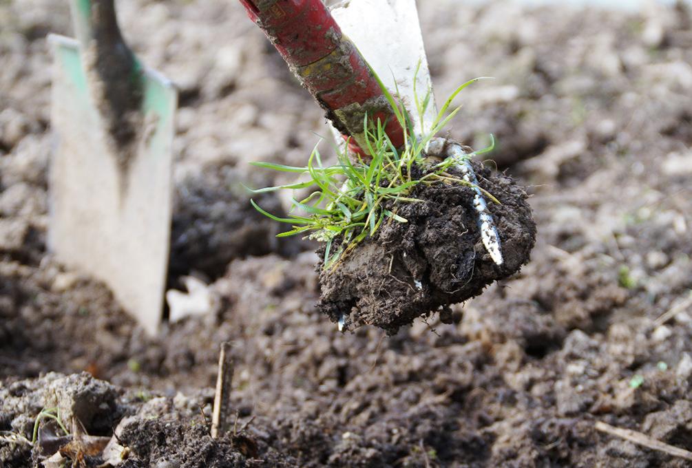 Bodenbearbeitung Für Den Gemüseanbau Ohne Fleiß Kein Preis
