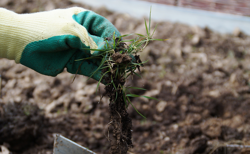 Bodenbearbeitung Unkraut jäten
