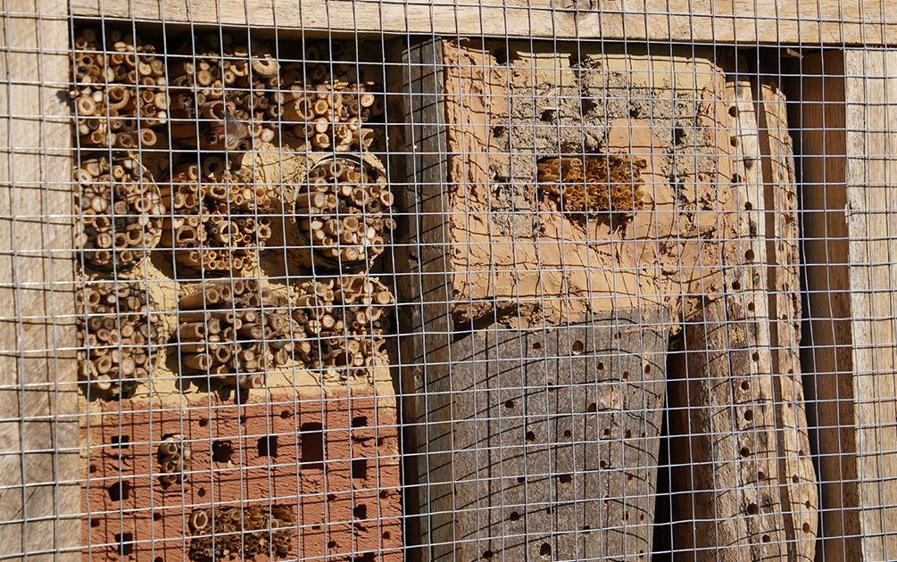 Schutzgitter Insektenhaus