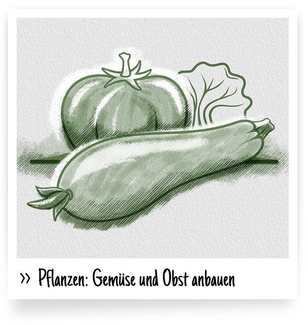 Pflanzen: Gemüse und Obst anbauen