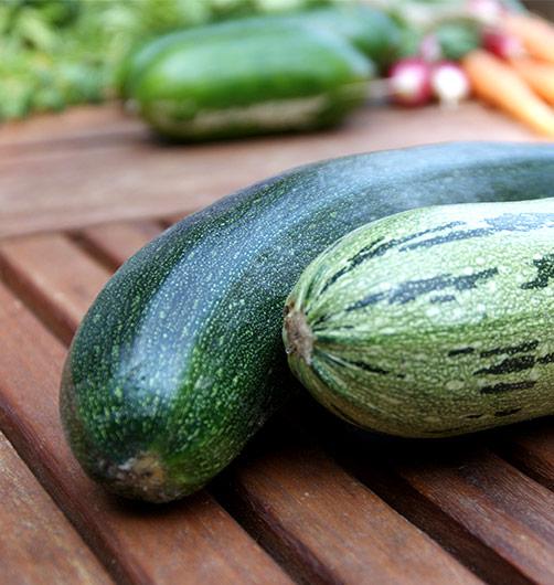 Zucchini Ernte